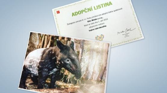 tapir_zoo