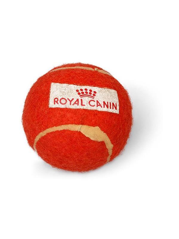 Reklamní házeč míčků pro psy - Royal Canis