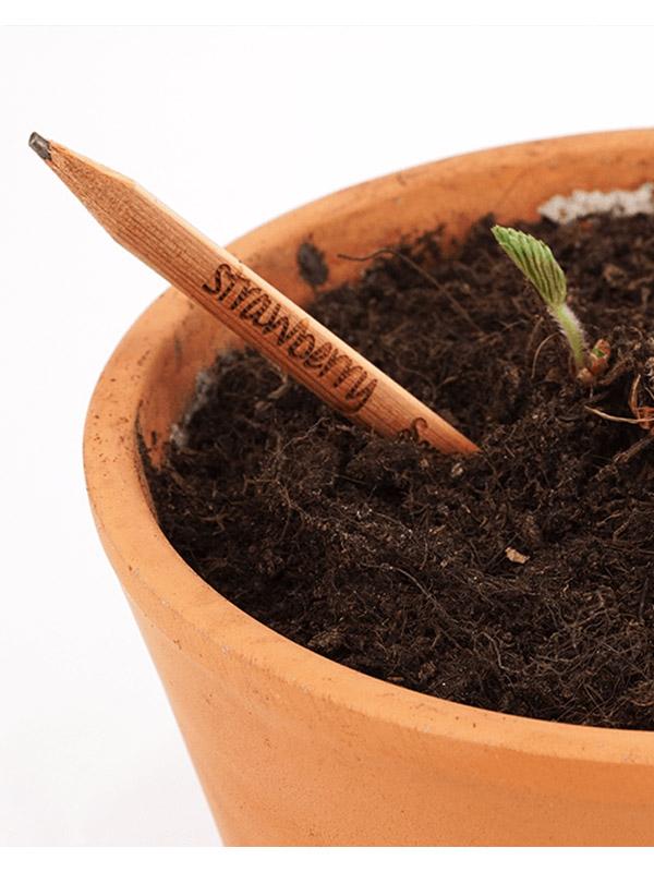 Rostoucí tužka